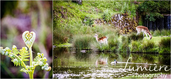 fern and deer at bradgate park during engagement shoot by lumiere photography