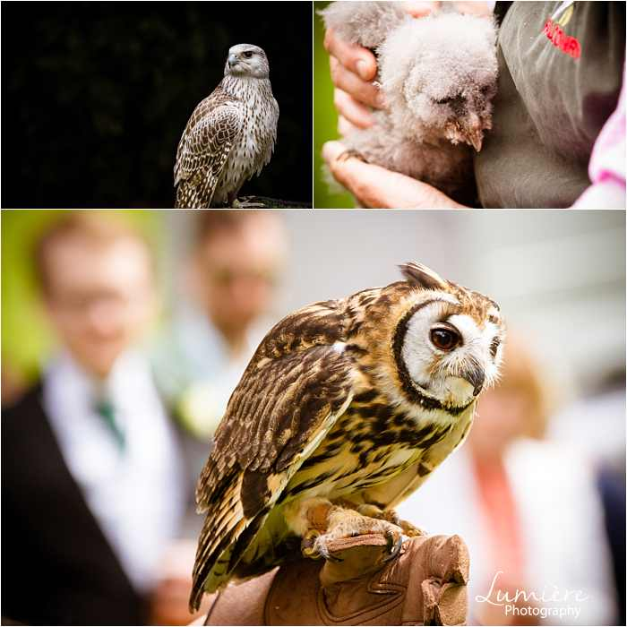 birds of prey at Hargate Hall wedding