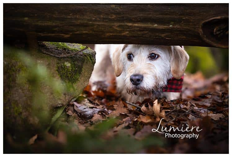 a wocker photoshoot in the Outwoods playing hide and seek