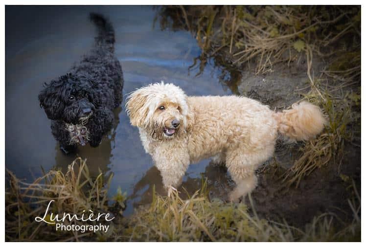 dog photos near Loughborough